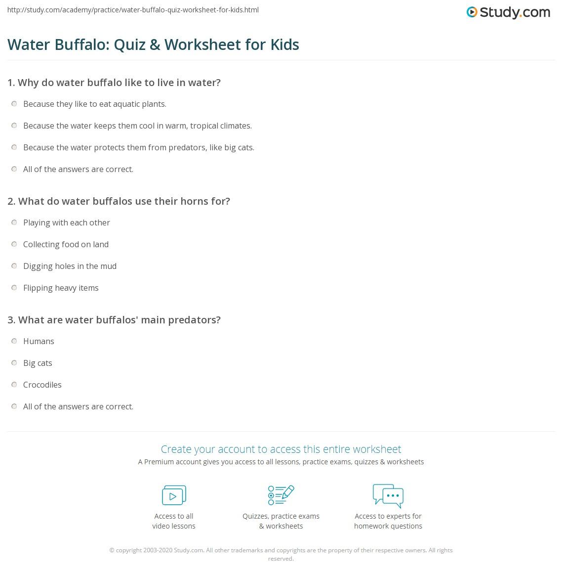 Water Buffalo Quiz Amp Worksheet For Kids