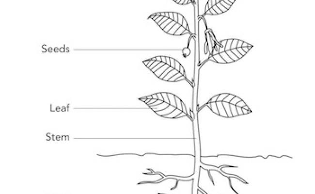 Plant Parts Lesson For Kids Study
