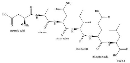 Draw the structure of the following peptide in its