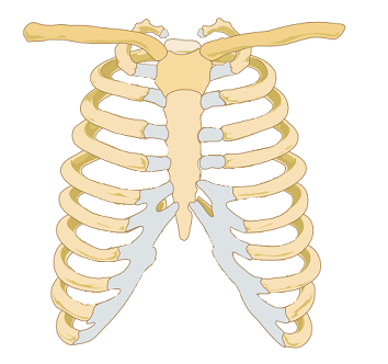 blank scapula bone diagram japanese crochet costochondral separation: symptoms & diagnosis | study.com