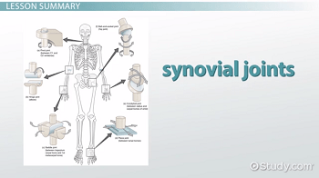 pivot joint diagram 1994 ford explorer speaker wiring the six types of synovial joints: examples & definition - video lesson transcript   study.com
