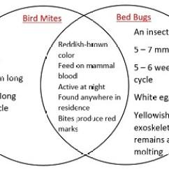 Bird Life Cycle Diagram Wiring Direct Tv Hook Up Mites Vs Bed Bugs Study Com Venn
