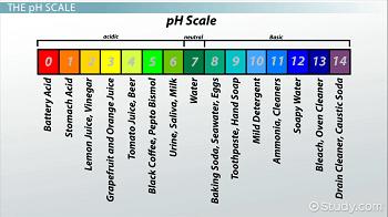 Acidic Basic & Neutral Solutions: Determining pH - Video ...