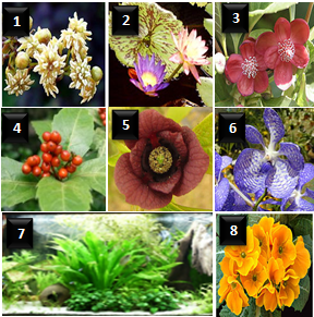 Flowering Plants Life Cycle & Examples Study Com