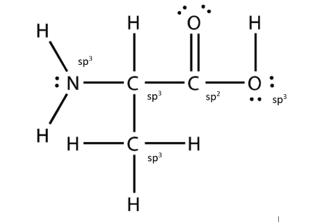 Consider the structure of the amino acid as shown below