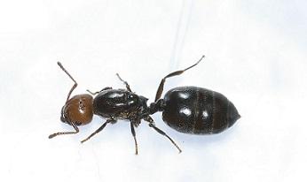 Ant Body Parts Diagram