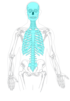 golden eagle skeleton diagram domestic switchboard wiring australia parts of the skeletal system lesson for kids study com bones