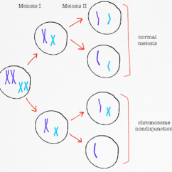Meiosis And Mitosis Diagram Blank Wiring What Is Trisomy? - Definition & Symptoms Video Lesson Transcript | Study.com