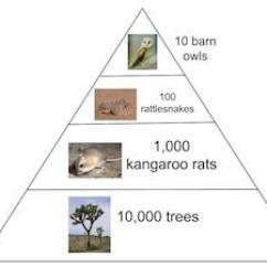 Deciduous Forest Food Web Diagram 2002 Chevy Cavalier Engine The Desert Energy Pyramid | Study.com