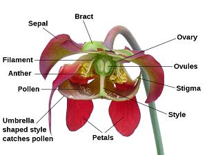 Flower Diagrams For Pollen Duster | Wiring Diagram