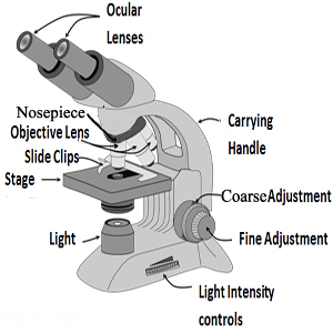 a diagram of microscope parts pioneer deh 2450ub wiring lesson for kids study com 123
