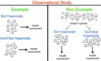 Observational Study In Statistics Definition & Examples Video