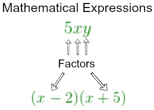 Parts of an Expression: Terms, Factors & Coefficients