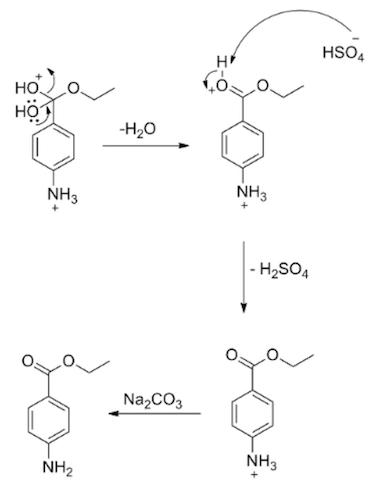 1. Explain why the amino group of p-aminobenzoic acid does