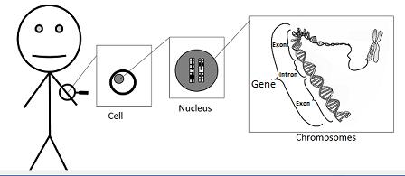 Alternative Splicing of Genes: Definition, Mechanism