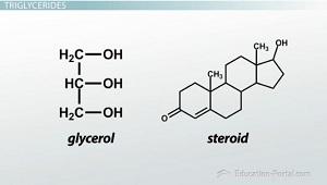Glicerol y esteroides