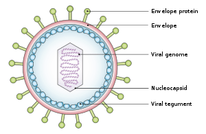 basic virus diagram cat 5 wiring b west nile structure and function study com