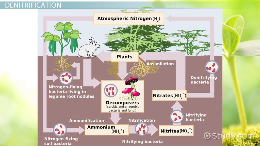 Acid Science Definition