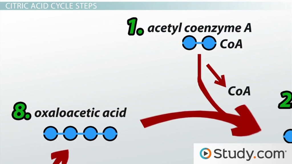 electron transport chain simple diagram 3 way switches wiring the citric acid (krebs) cycle: products and steps - video & lesson transcript | study.com