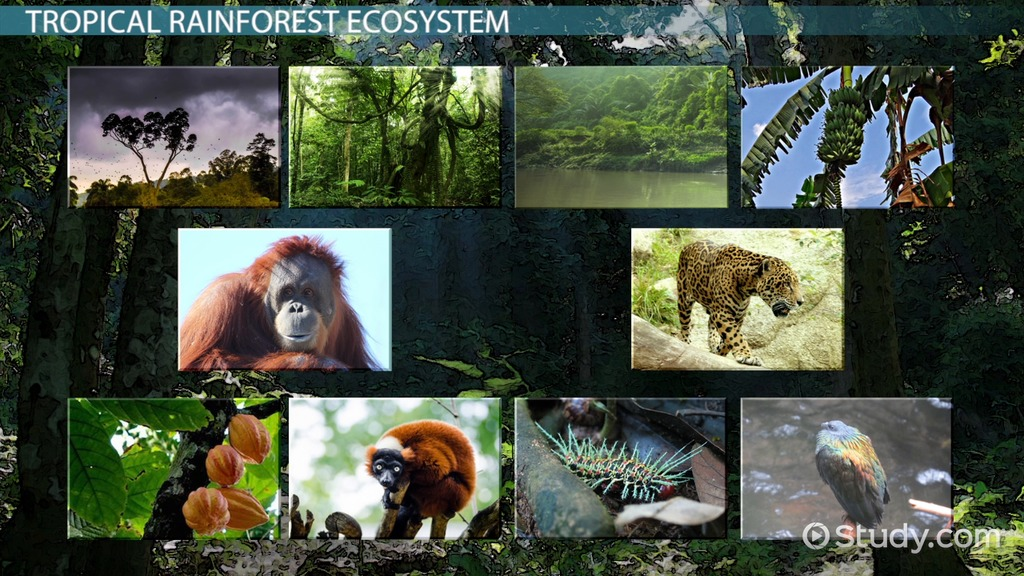 Tropical Rainforest Producers And Consumers Video