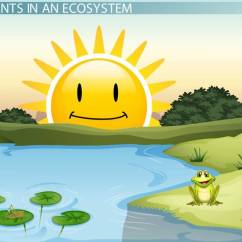 Pond Ecosystem Diagram Car Equalizer Lesson For Kids - Video & Transcript | Study.com