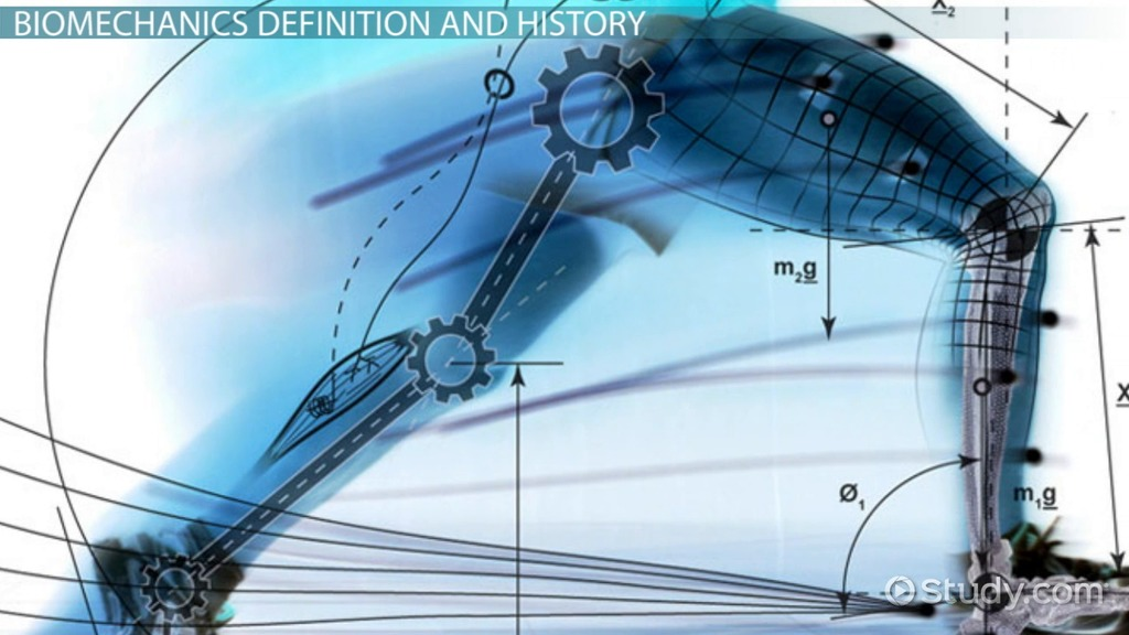 What Is Biomechanics? Definition & Applications Video
