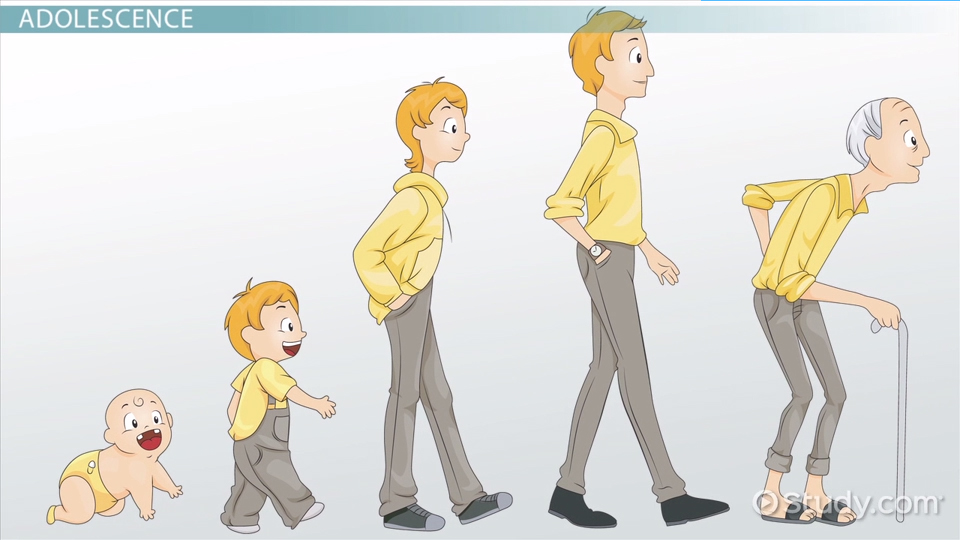 Adolescence Stage Of Development Definition & Explanation