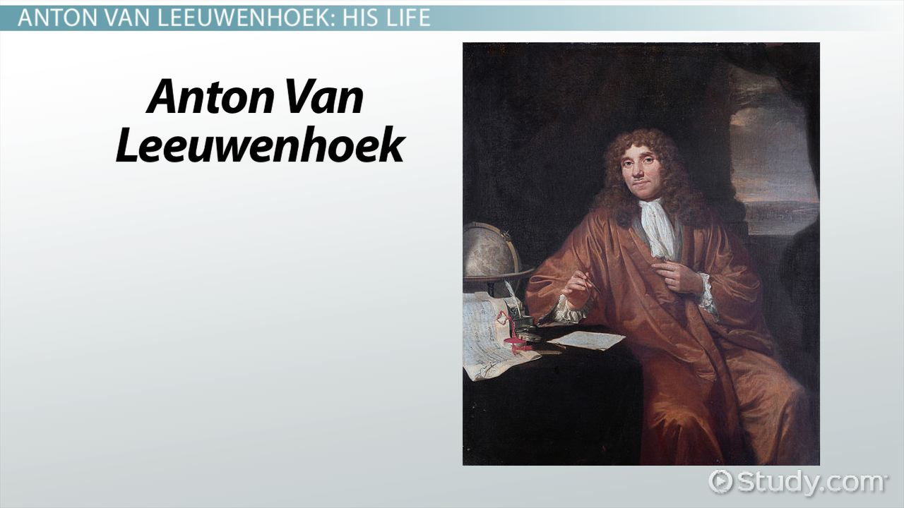 Anton Van Leeuwenhoek: Biography, Cell Theory & Discoveries - Video &  Lesson Transcript | Study.com