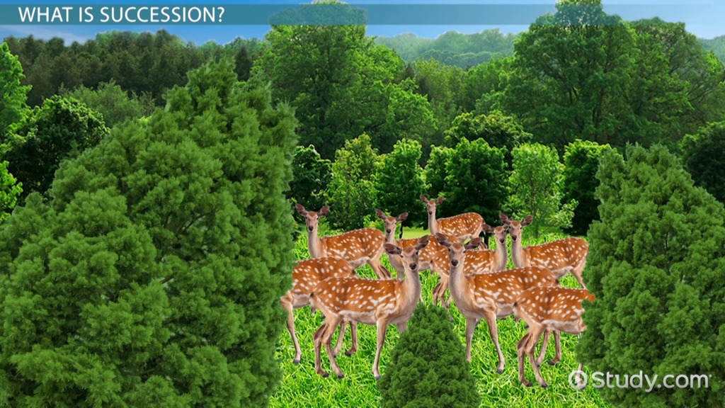 What Is Succession In Biology