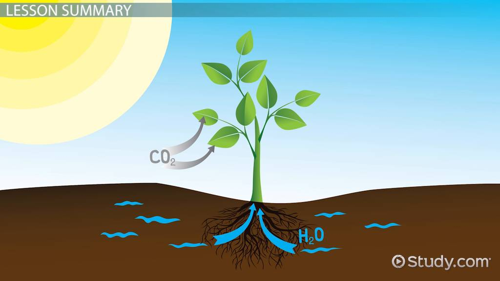 Matter & Energy Changes During Photosynthesis Video