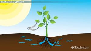 Matter & Energy Changes During Photosynthesis  Video & Lesson Transcript | Study