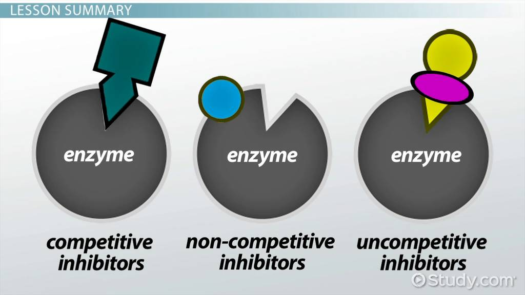 Enzyme Inhibitor Definition & Examples Video & Lesson