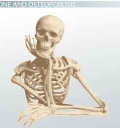 cancellous bone definition structure function video lesson transcript study com [ 1339 x 752 Pixel ]