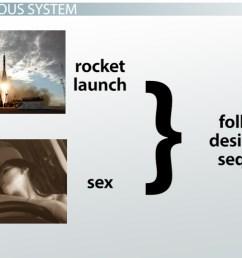 how the central nervous system controls erection ejaculation video lesson transcript study com [ 1280 x 720 Pixel ]