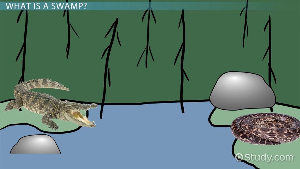 Abiotic & Biotic Factors Of Swamps Video & Lesson