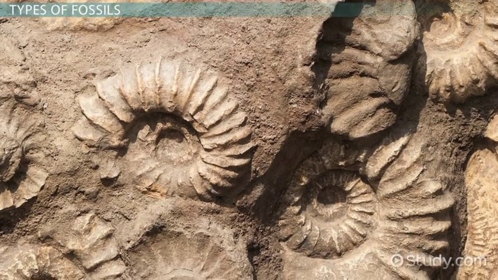 Fossil Definition Types Characteristics & Examples