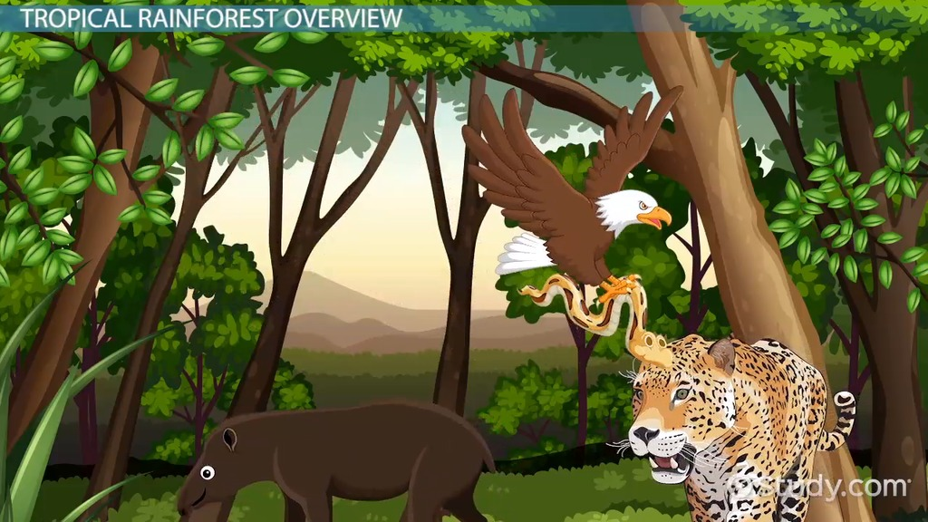 Tropical Rainforest Animal Adaptations Video & Lesson