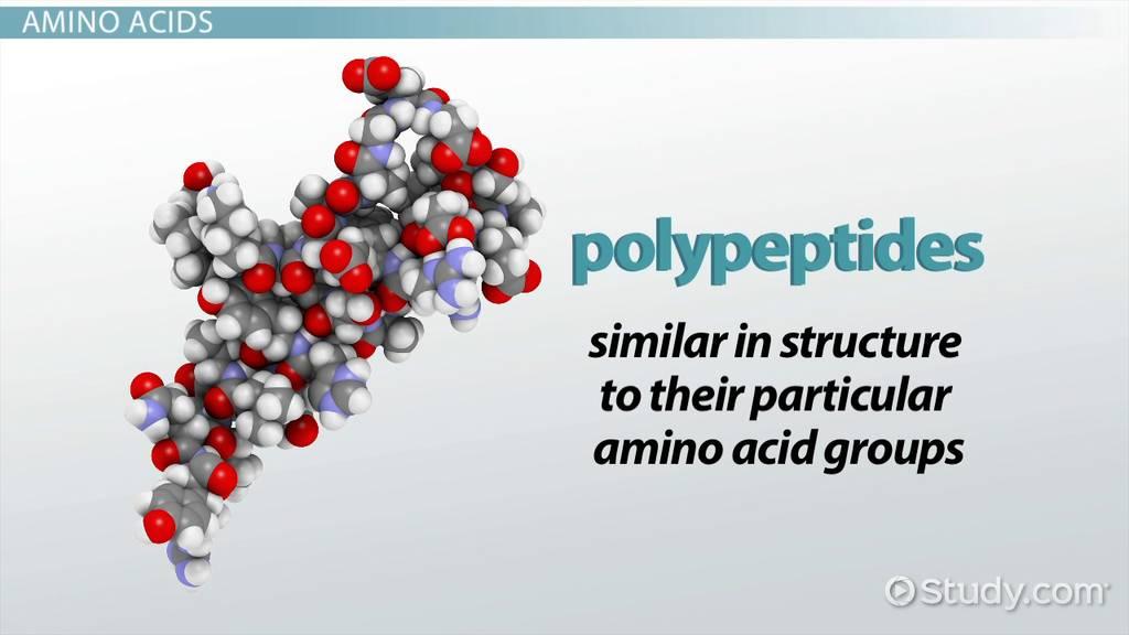 Polypeptide Definition Formation  Structure  Video  Lesson Transcript  Studycom