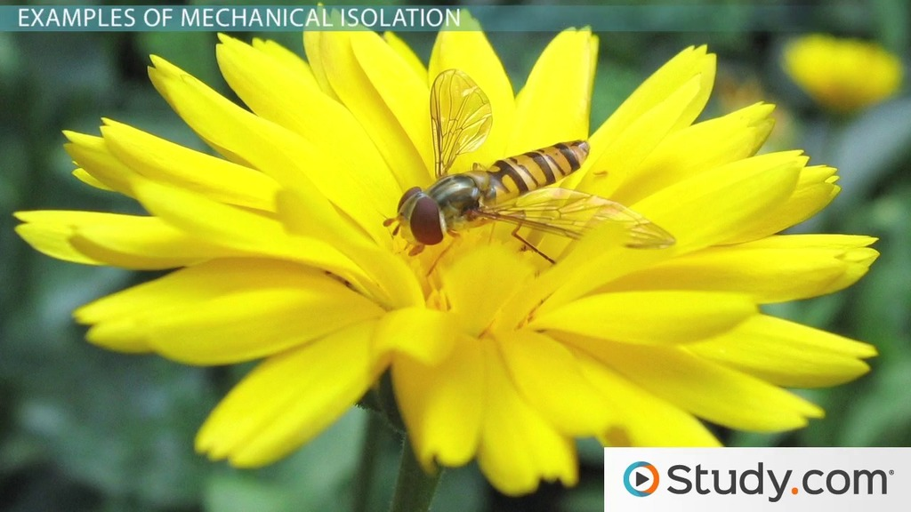 Mechanical Isolation Definition & Example Video