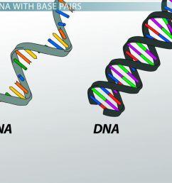 nitrogenous base definition pairs video lesson transcript study com [ 1280 x 720 Pixel ]
