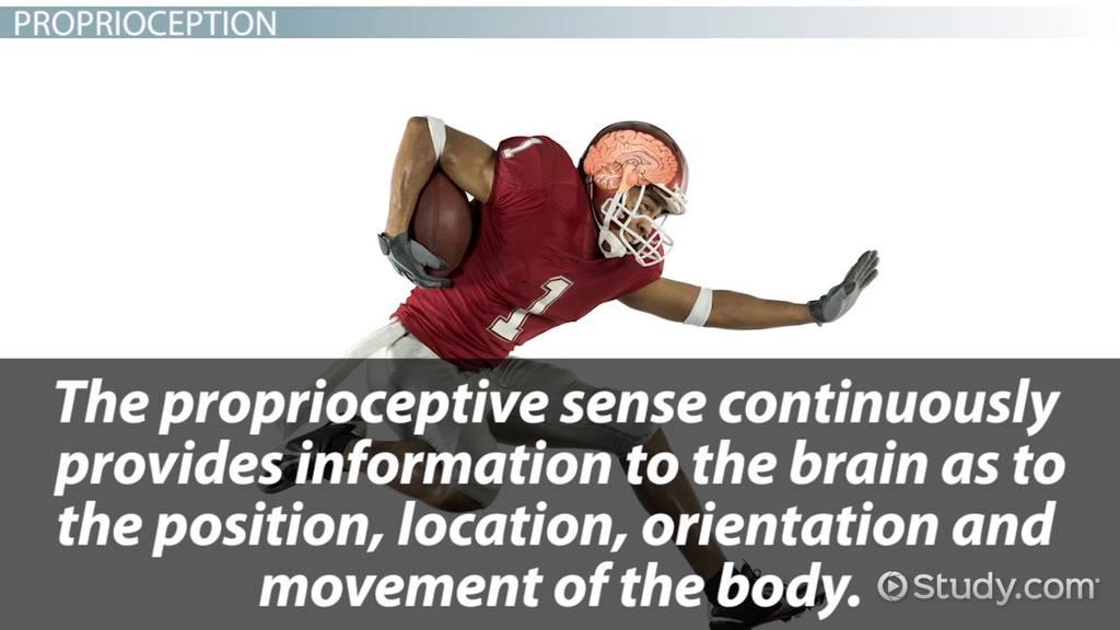Proprioception Definition  Exercises  Video  Lesson