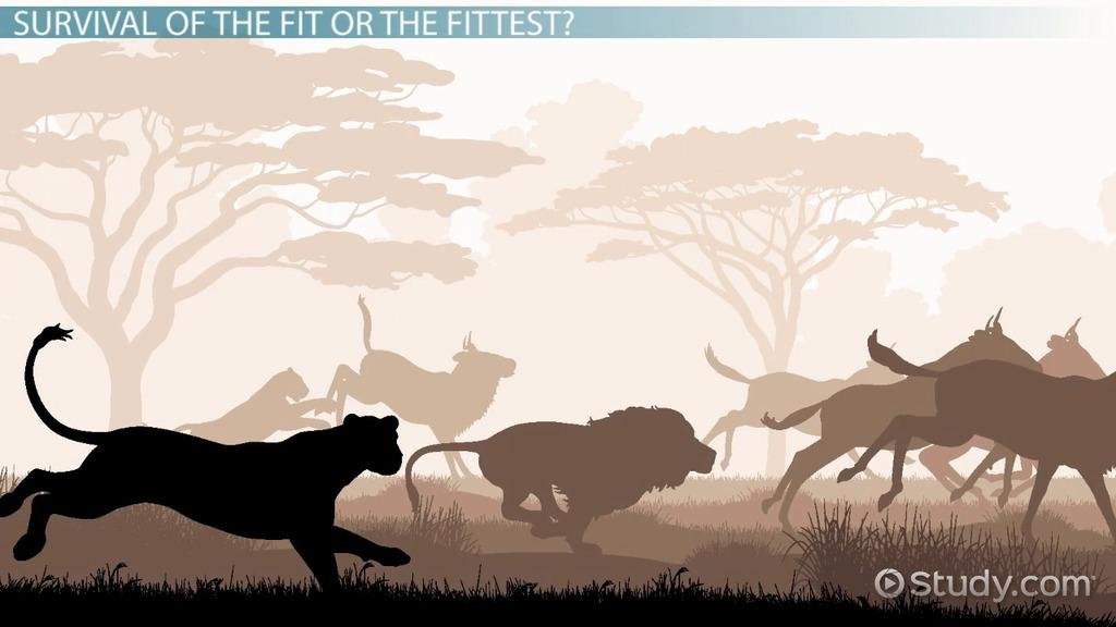 Evolutionary Fitness Definition & Explanation Video