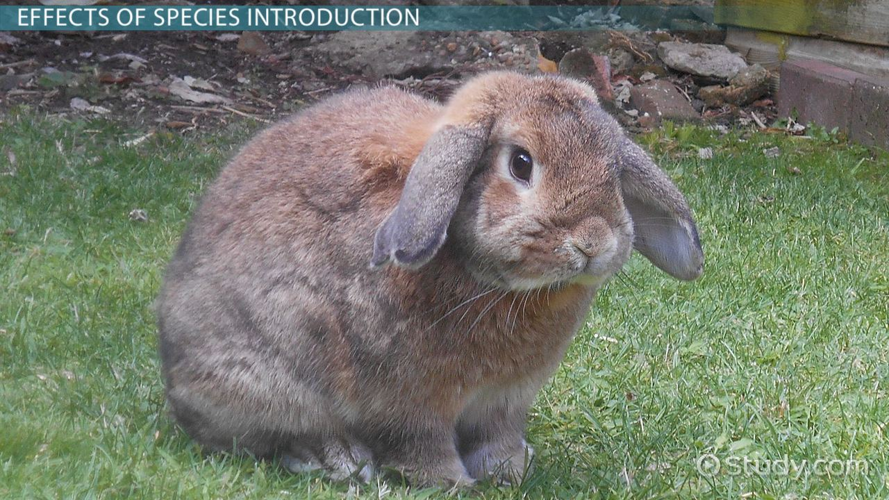 What Is An Introduced Species? Definition Effects