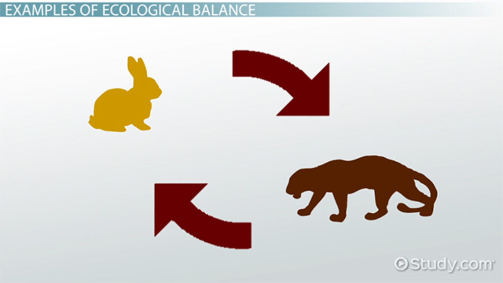 What Is Ecological Balance? Definition & Importance