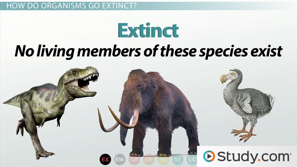 Differences Between Endangered Species And Threatened