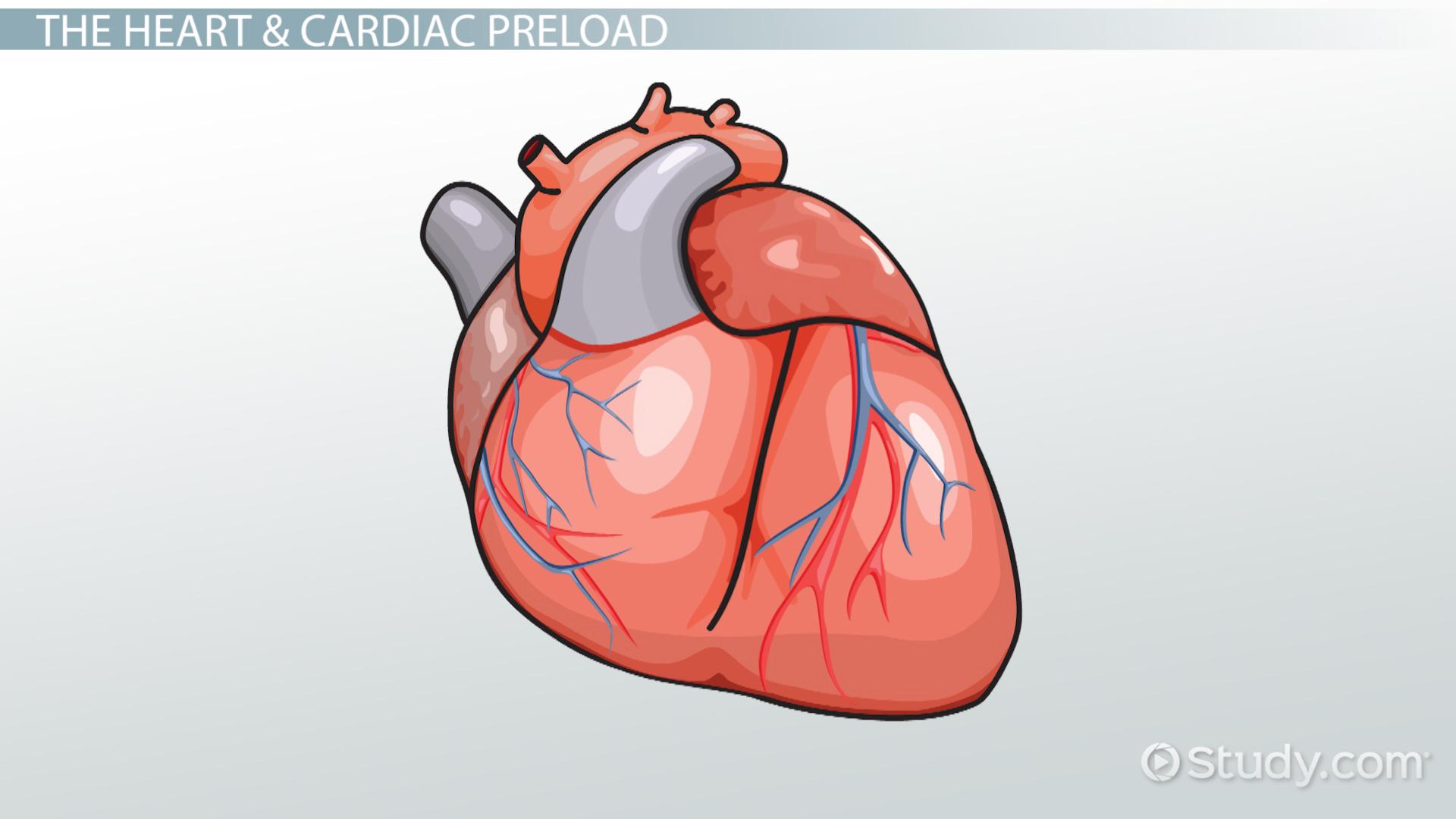Cardiac Preload Definition Amp Reduction