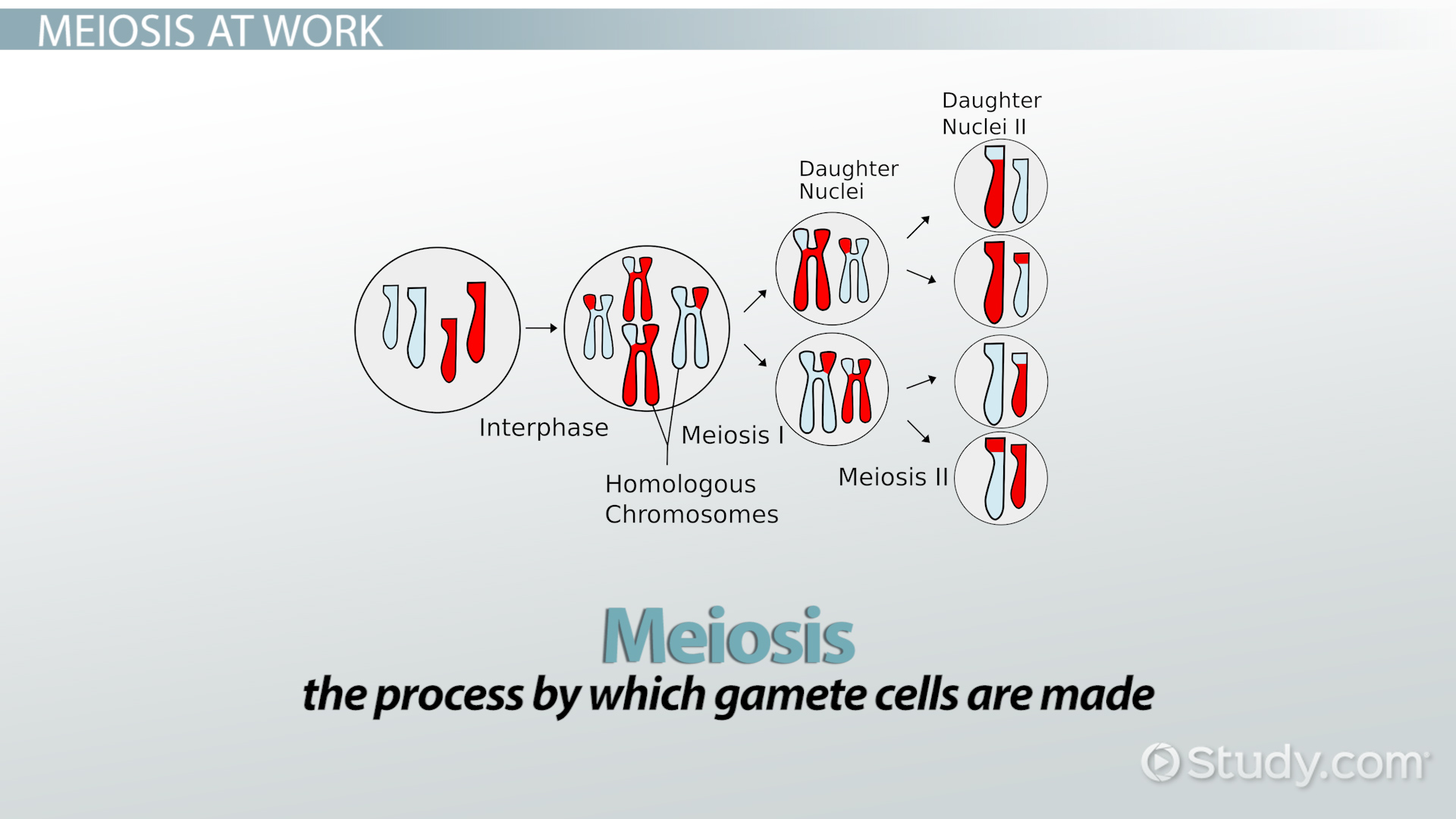 hight resolution of genetic crossing over definition concept