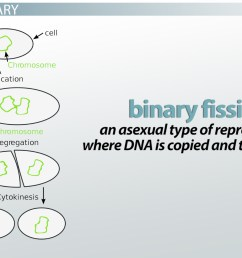 binary fission definition steps examples video lesson transcript study com [ 1920 x 1080 Pixel ]