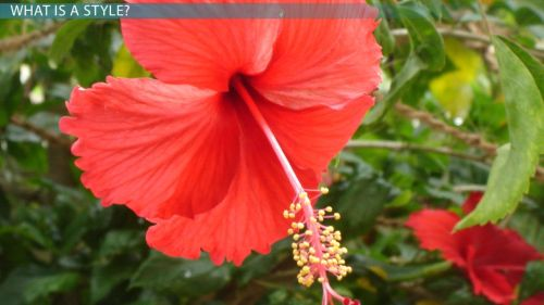 small resolution of style of a flower function variation video lesson transcript study com
