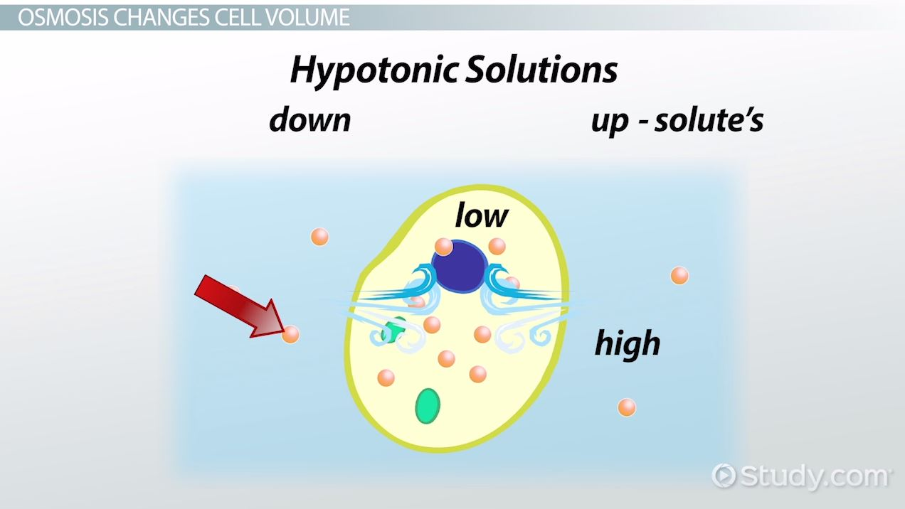 hight resolution of Osmosis: Definition \u0026 Examples - Biology Class (Video)   Study.com